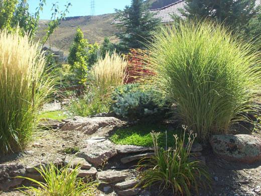 denver-landscaping-xeriscape8