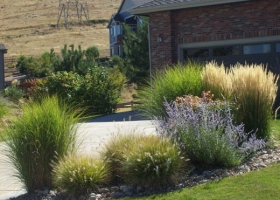 denver-landscaping-xeriscape4